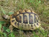 Turtle in the grass — Stock Photo