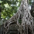 Ancient Ta prohn temple in Angkor, silk-cotton tree consumes the ancient ruins, Cambodia — Stock Photo