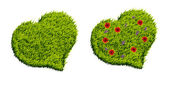 Green grass heart shape — Stock Photo