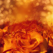 Splashing orange rose card — Stock Photo