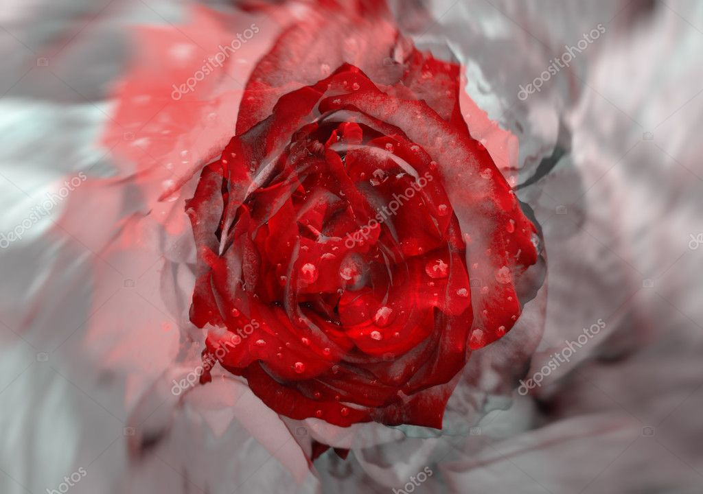 Red rose over abstract spinning grey background. — Stock Photo #11848683