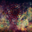 Colourful floral grunge background — Stock Photo #12109208