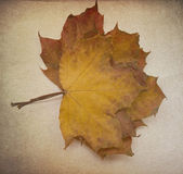 Grunge maple leaves — Foto Stock