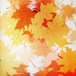 Autumn mpaple leaves background — Stockfoto #12257871