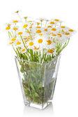 Beautiful marguerite flowers in vase — Stock Photo