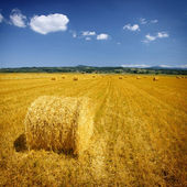 Field with hay bales — Stock Photo