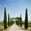 Cypress alley in Tuscany — Stock Photo