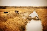 Skot ochlazení ve vodě — Stock fotografie