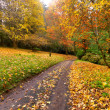 Autumn on the country road — Stock Photo