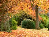 Golden autumn garden — Stock Photo