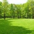 Lawn in park - Stock Photo