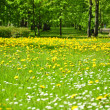 Lawn of flowers in park — Stock Photo