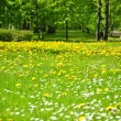Lawn of flowers in park - Stock Photo
