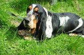 Pes má odpočinek na trávníku — Stock fotografie