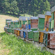 Hives full of bees producing honey in a camp in the mountains - Stock Photo
