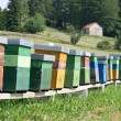 Colourful hives full of bees producing honey in a camp in the mo — Stock Photo