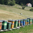 Hives full of bees producing honey in camp in mountains — Stock Photo #11562541