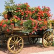 Old wooden cart with pots of Geraniums flowers - Stock Photo