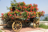 Old wooden cart with pots of Geraniums flowers — Fotografia Stock