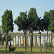 Ancient Greek temples and trees in southern Italy - Stockfoto