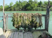 Fishing nets used to catch the fish put forth to dry in the Sun — Stockfoto