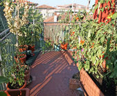 Potted vegetables grown in a terrace of an apartment building in — Stock Photo