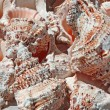 Stock Photo: Series of pink shells collected in ocean