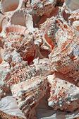 在海洋中收集的粉红贝壳系列 — 图库照片