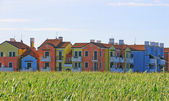 Colorful houses with the corn field in front of them — Stock Photo