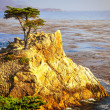 Lone cyprus at ocean coast, Monterey, California — Stock Photo