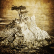 vintage Lone cypress, monterey, Californie — Photo
