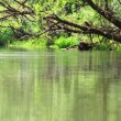 Trees over calm river — Stock Photo