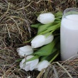 Glass of milk and white tulips on hay — Stock Photo