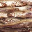Stock Photo: Smelt background