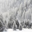 Mountain forest in winter - Stock Photo