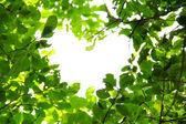 Love nature concept — Stock Photo