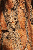 Bark's close up — Stockfoto