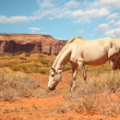 Stock Photo: Wild white horse