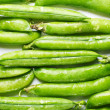 Young green pea pods laid in the rows — Stock Photo