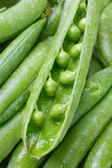Close-up of fresh green pea pods with water drops. — Stock Photo