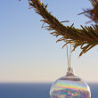Ornament On A Tree In Front Of The Sea — Stock Photo