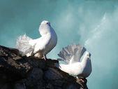 White doves — Foto de Stock