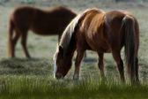 Horses in the field in a spring day — Stok fotoğraf