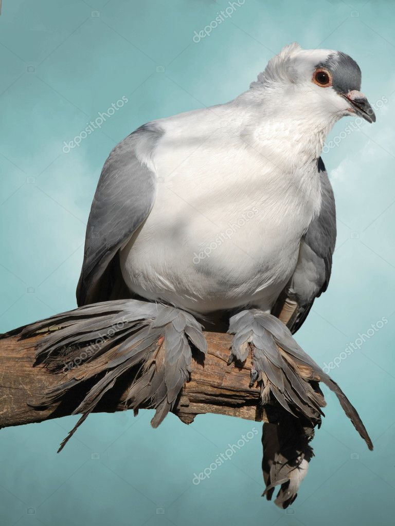 Dove in a branch with blue sky  Stock Photo #11770092