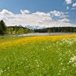 Royalty-Free Stock Photo: Meadow in front of Hegratsrieder See, Bavarian Alps, Germany