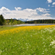 Meadow in front of Hegratsrieder See, Bavarian Alps, Germany - Stock Photo