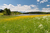 Meadow in front of Hegratsrieder See, Bavarian Alps, Germany — Stock Photo