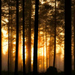 Sunset in foggy forest — Stock Photo #11535459