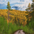 Dirt road in wilderness — Stock Photo