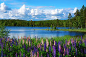 Scandinavian summer landscape — Stock Photo